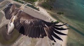 Drone billeder